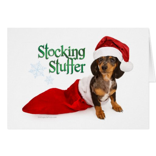 dachshund stocking stuffer greeting card