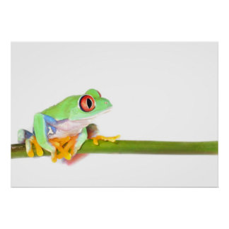 re eyed tree frog print