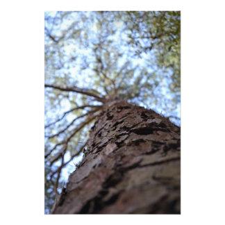 Reach High Photographic Print
