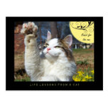 Reach Life Lessons From a Cat Postcard