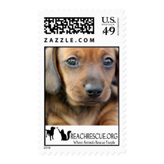 REACH Rescue Postage Stamps
