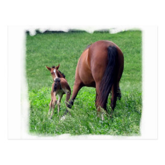Reaching Foal with Mare Post Cards