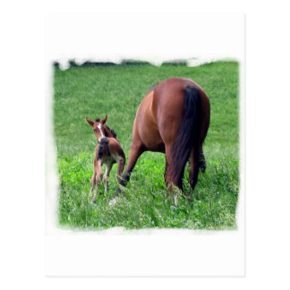 Reaching Foal with Mare Post Card