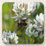 Reaching for Pollen; No Text Beverage Coaster