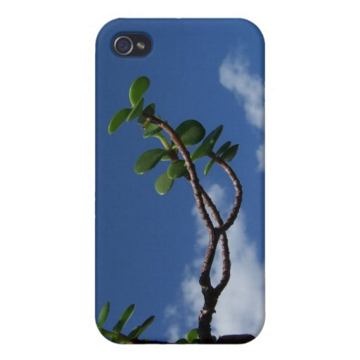 Reaching for sky small portulacaria bonsai cover for iPhone 4
