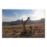 Reaching For The Desert Sun Photo