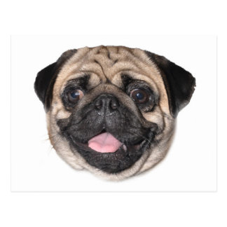 Read My Pugzy Face Postcard
