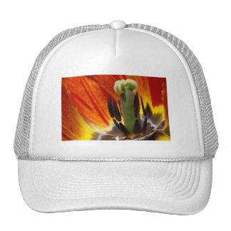 ready... aim... trucker hat