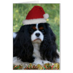 Ready For Christmas Greeting Cards
