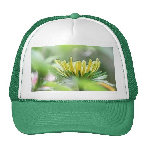 Ready To Bloom - Rudbeckia Trucker Hat