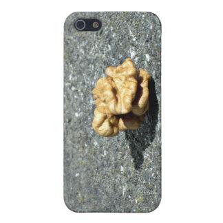 Ready to eat Walnut on a granule iPhone 5 Case
