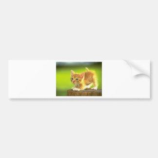 Ready To Pounce Kitten Bumper Sticker