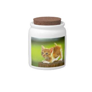 Ready To Pounce Kitten Candy Jar