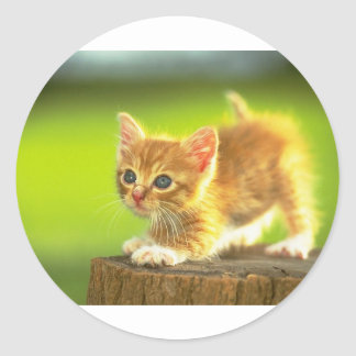 Ready To Pounce Kitten Classic Round Sticker