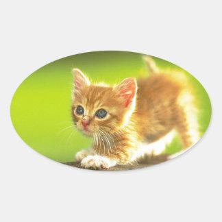 Ready To Pounce Kitten Oval Sticker