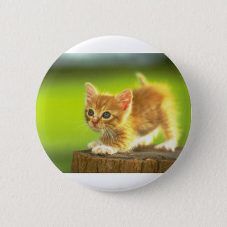 Ready To Pounce Kitten Pinback Button