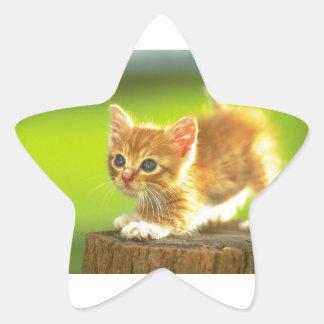 Ready To Pounce Kitten Star Sticker