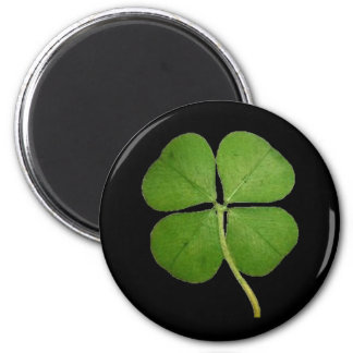 Real 4 Leaf Clover Shamrock Black Fridge Magnet