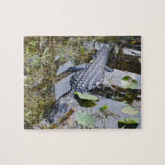 Real alligator puzzle for the younger set!