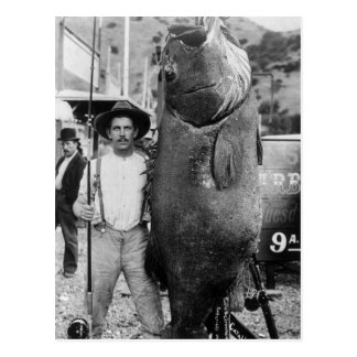 Real Big Fish, early 1900s Postcard