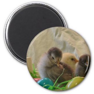 Real Easter Chicks 2 Inch Round Magnet