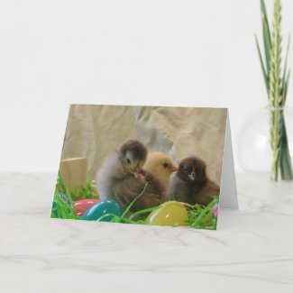 Real Easter Chicks card