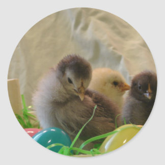 Real Easter Chicks Classic Round Sticker
