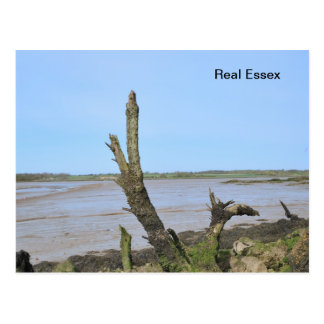 Real Essex Post Card