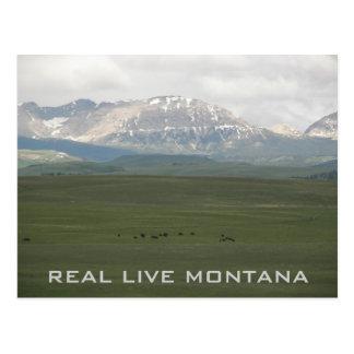 Real Live Montana Travel Photo Postcard