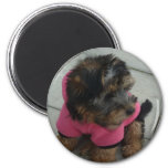 Real men wear pink - Oscar the Yorkie Magnets