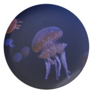 Real photo taken of jelly fish dinner plate