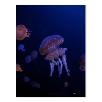 Real photo taken of jelly fish postcard