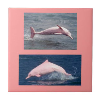 real pink dolphins tile