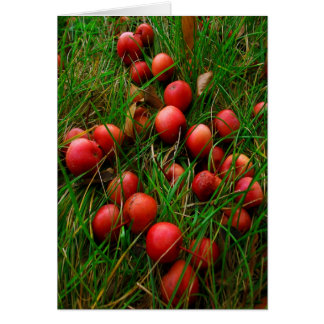 Real Red Crabby Apples Stationery Note Card