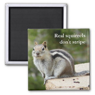 Real squirrels don't stripe 2 inch square magnet