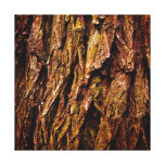 Real Tree Bark Stretched Canvas Print