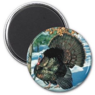Real Turkey Fridge Magnets