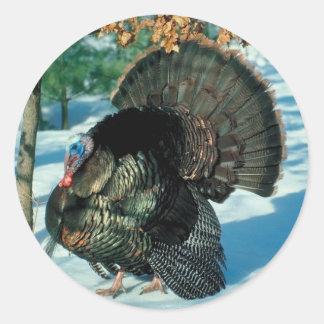 Real Turkey Photo Winter Snow Classic Round Sticker