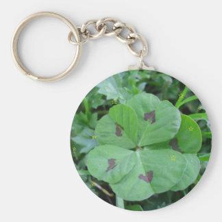 Real wild lucky 5 leaf clover keychain