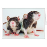 Real Women Own Rats! Greeting Card