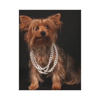 Real Yorkie in Pearls Canvas Print
