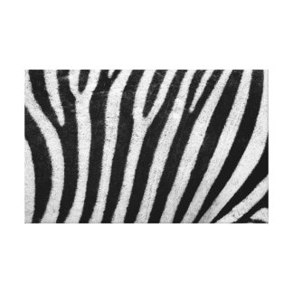 Real Zebra Stripes Photography Canvas Wall Art