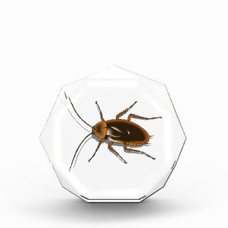 Realistic Brown Cockroach Insect Award