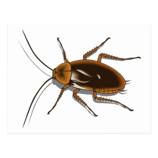 Realistic Brown Cockroach Insect Post Cards