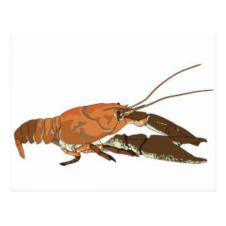 Realistic Crayfish/Crawdad Postcard