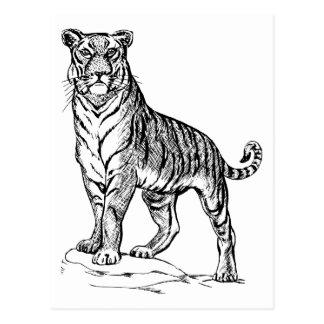 Realistic Hand Drawn Tiger Facing Forward Postcard