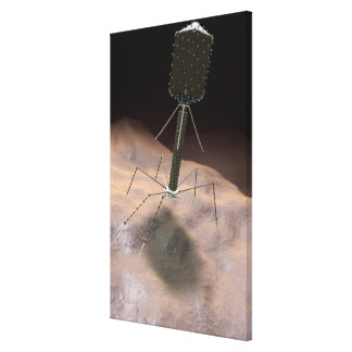 Realistic Illustration of bacteriophage Canvas Print