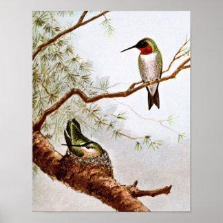 Realistic Ruby-Throated Hummingbird Art Poster