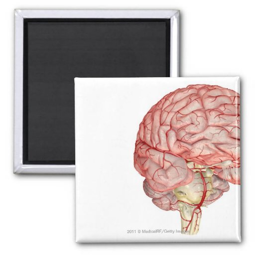 Realitic rendering of the human brain 2 inch square magnet
