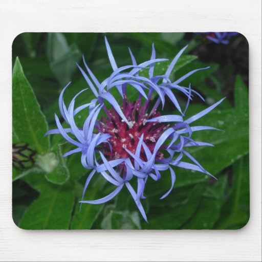 Really cool looking blue flower mousepad